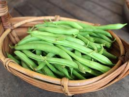 Bean Seeds - Bush - Provider - Vegetable Seeds - Outdoor Living - Garden - $34.99+