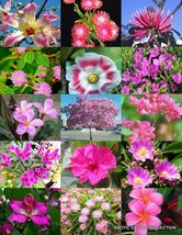 PINK FLOWER PLANTS MIX exotic garden tree fragrant bonsai bloom seed 15 seeds - $18.00