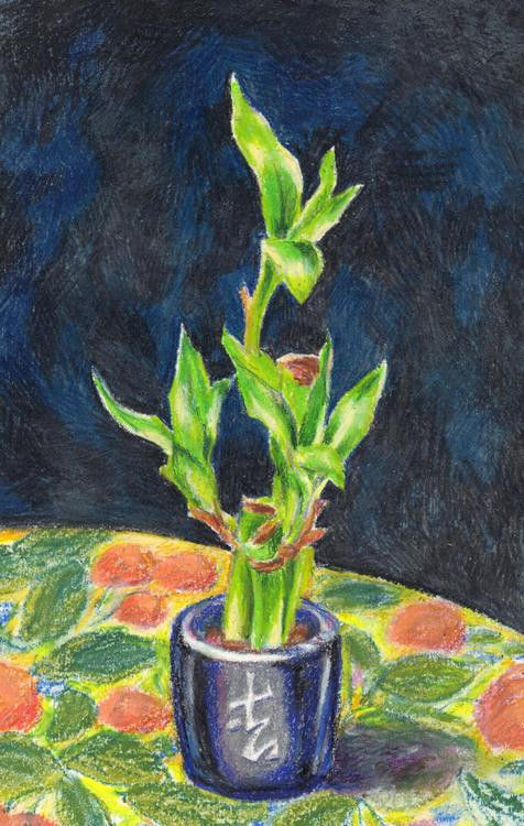 "Akimova: BAMBOO, garden, still life, plant, 6""x10"""