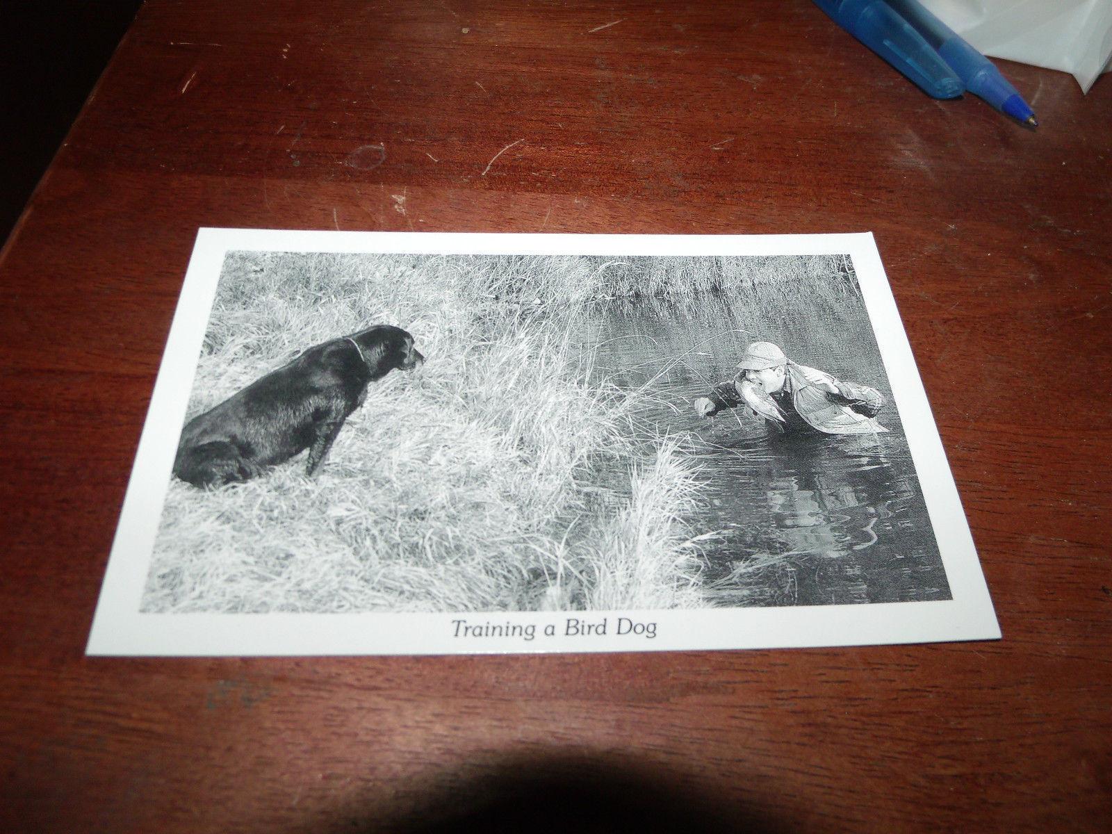 UNUSED POSTCARD TRAINING A BIRD DOG