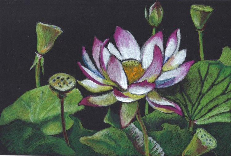 "Akimova: LOTUS, flower, spring, colored pencils,   5.5""x9"""