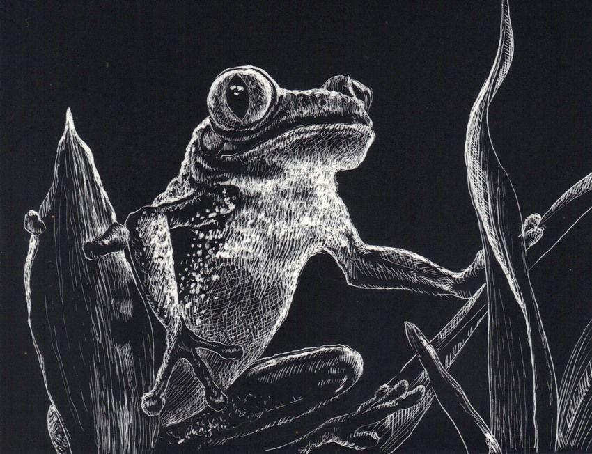 "Akimova: TREE FROG , scratch paper, animal, wild, black and white, 4""x5.25"""