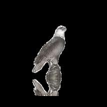 Daum  Small grey eagle Crystal France  05410 NEW - $791.01