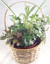 Hanging Flower Plant Indoor Outdoor Basket Planter - unique from Jmbamboo - €23,83 EUR