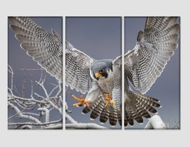 Peregrine Falcon Canvas Print Wild Nature Wall Art Hawk Photography Poster Hunte - $49.00