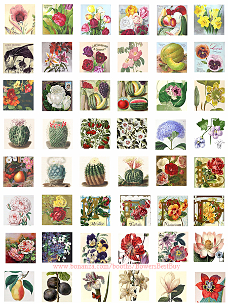 """flowers fruit vintage art clipart collage sheet 1"""" squares digital download imag"""