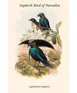 Lophorhina Supbera - Supberb Bird of Paradise by John Gould - Art Print - $19.99+