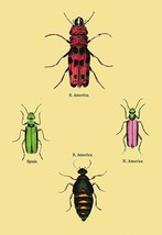 Beetles from North and South America and Spain #2 by Sir William Jardine - Art P - $19.99+