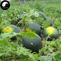 Buy Watermelon Fruit Seeds 50pcs Plant Citrullus Lanatus Round Black Bea... - $5.99