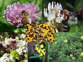 SHIPPED FROM US 1,920,000 Honey Bee Mix Seeds, ZG09 - $361.16