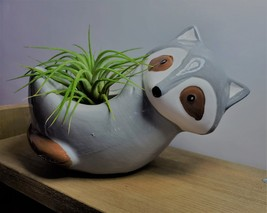 "Live Air Plant in Raccoon Animal Planter, 5"" grey glazed ceramic pot image 4"