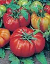 Tomato, Beefsteak, Heirloom, 25+ Seeds, Great Sliced Tomato, Delicious - $1.99