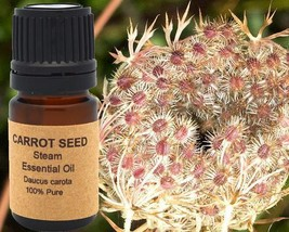 Carrot Seed Essential Oil 5 ml, 10 ml or 15 ml - $6.83+