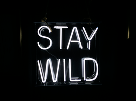 "New Stay Wild Wall Decor Acrylic Back Neon Light Sign 14"" Fast Ship - $60.00"