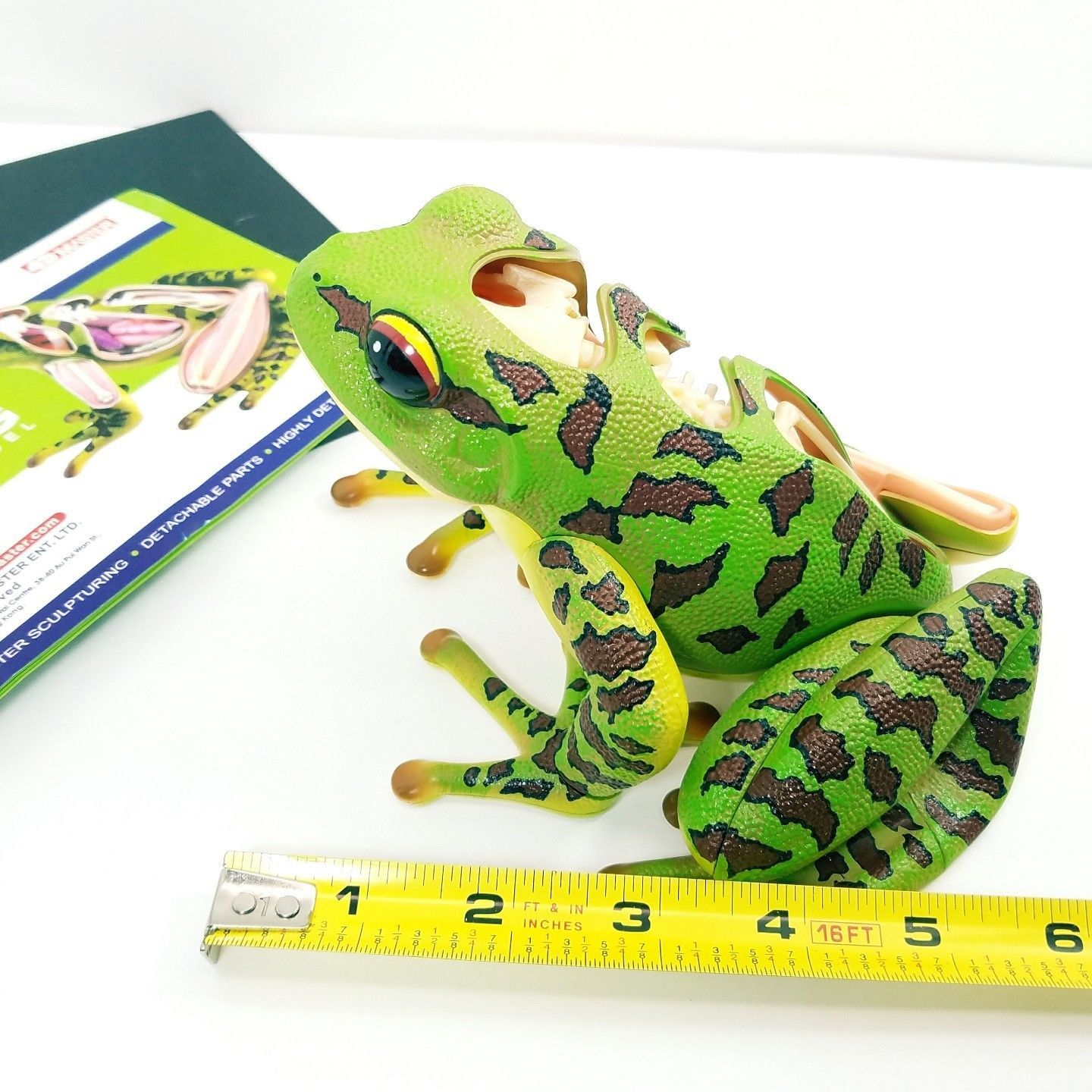 Fame 4D Master Frog 3D Anatomy Model and 50 similar items