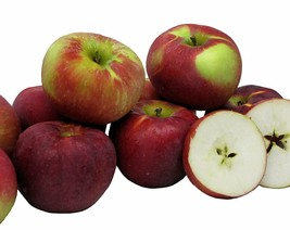 Kauffman Orchards Homegrown Cortland Apples, Fresh-picked in Lancaster... - $28.50+
