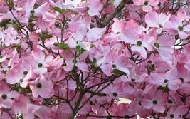 Pink Dogwood quart pot image 2