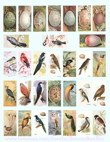 "vintage birds bird eggs clip art digital download domino collage sheet 1"" x 2"""
