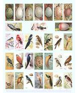 vintage birds bird eggs clip art digital download domino collage sheet 1... - $2.99
