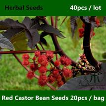Red Castor Bean Seeds 40pcs, Ricinus Communis, Castor Oil Plant Hong Bi Ma - $5.98