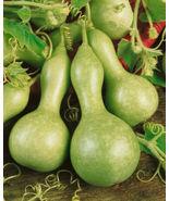 Birdhouse Gourd Seeds, Heirloom Gourd Seeds, Non-Gmo, Make Some Birdhous... - $5.99