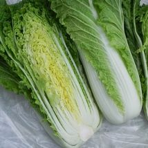 SHIP From US, 25 Seeds Michihili Chinese Cabbage, DIY Healthy Vegetable AM - $18.99