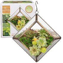 Glass Geometric Terrarium, Succulent & Air Plant- Diamond Mini 5 x 5 x 3... - $12.99