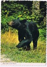 North Carolina Postcard American Black Bear Great Smoky Mountains Nation... - $2.84