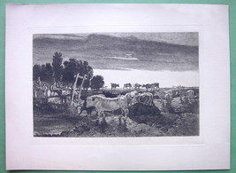ORIGINAL ETCHING - England Cattle Cows Pasture in Regent's Park - $18.90
