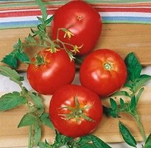 Tomato Non-GMO Heirloom Rutgers Jersey 200 Seeds Heavy Yields Disease Resistant - $3.95