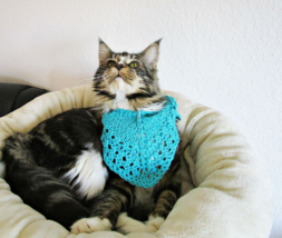 Cat bandana Сat costume Small pet bandana Turquoise knit bandana for cat - $13.46