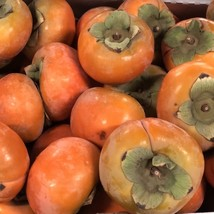 2 Gallon Fuyu Persimmon Tree Potted Plant - $109.69