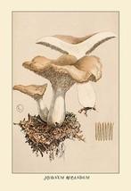 Hydnum Repandum by W. Hamilton Gibson - Art Print - $19.99+