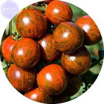 BEST PRICE 100 Seeds Brown Trailing Tumbling Tomato,DIY Vegetable Seeds ... - $4.89