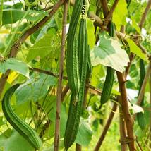 20 BUAB LAEM Luffa Angled Gourd seeds, Chinese Okra Seeds - $14.83