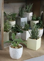 50 White Ivory Silver Herb Flower Succulent Planter Containers Eco Weddi... - $139.95