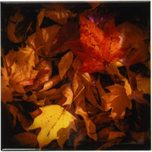 Cst_110777_4 Fall Leaves On Forest Floor-Ceramic Tile Coasters, Set Of 8 - $64.70