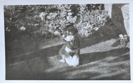 Old Photograph Miniature Poodle Dog in Garden - $3.96