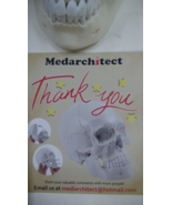 Skull - Medarchitect Human Skull with Numbers (3-Part)  - $64.00