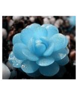 40 seeds mini succulents seed Tetragonia blue stone LithopsPseudotruncat... - ₹418.40 INR