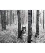 Lone Wolf Home Decor Canvas Print A4 Size (210 x 297mm) - $4.90