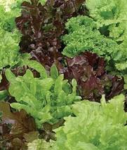 Organic Gourmet Lettuce Mix Seeds (5 Lbs) - $138.60