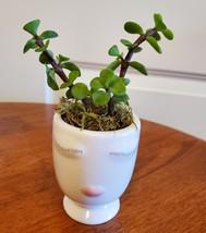 "Succulent in Face Planter, Elephant Bush Live Plant in White Ceramic Pot 2.5"" W image 5"