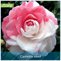 10pcs Seed Flower Seeds Bonsai Plants For Home Garden Exotic Flowering P... - $2.18