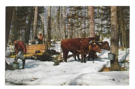 Vermont Maple Syrup Gathering Sap Vintage Derick Photo Mike Roberts Post... - $4.99
