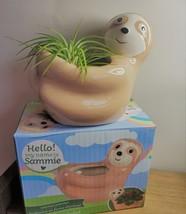 "Live Air Plant in Sloth Animal Planter, 5"" beige glazed ceramic pot image 4"