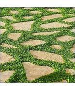 Dichondra Ground Cover Seeds (Dichondra Repens) 1 Oz Seeds TkThesun - £26.60 GBP