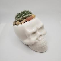 "Sempervivum Succulent in Ceramic Skull Planter 3.5"", Hens & Chicks Live Plant image 4"