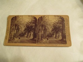 Palmetto Avenue Queens Hospital grounds Honolulu Hawaii HI Stereoview Card - $14.99