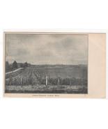 Gibson Vineyard Farming Lawton Michigan 1907 postcard - $6.44